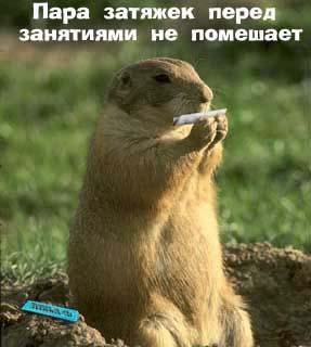 http://chukcha.net/pic/fot/pb/078/pb7803.jpg