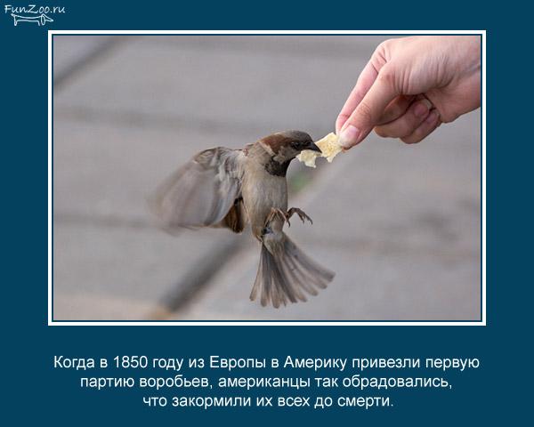 """Картинки: фото и рисунки про животных, птиц, рыб... и других """"братьев наших и сестёр"""" - Страница 3 - Все Тут Online"""