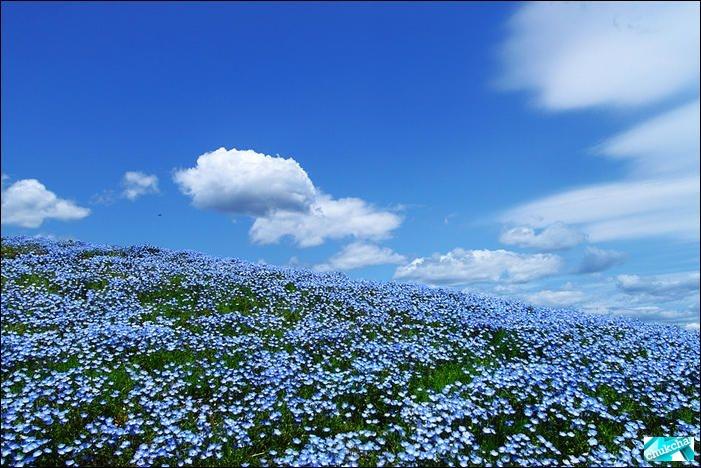 Красивый японский национальный парк Хитачи (13 фото)